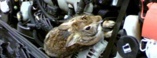 RabbitsEatHondax736x490